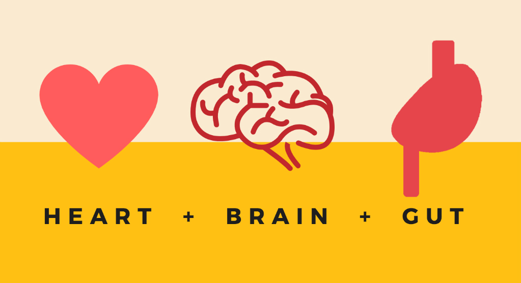 Image result for gut and heart brain connection